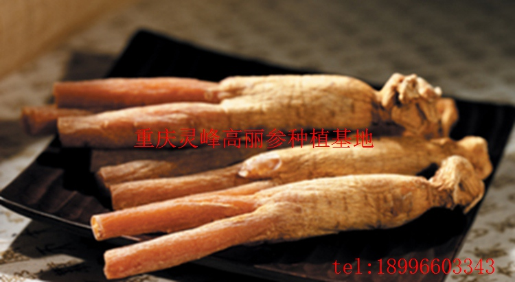 十一类人不适宜吃人参(www.32nb.com)